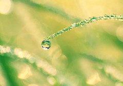 (what_marty_sees) Tags: morning light green water grass dew waterdrops reverselens hcf macromethod highcallingfocus