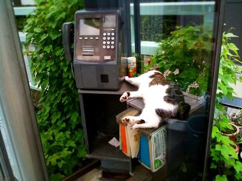 猫が電話ボックスの中で寝てる。