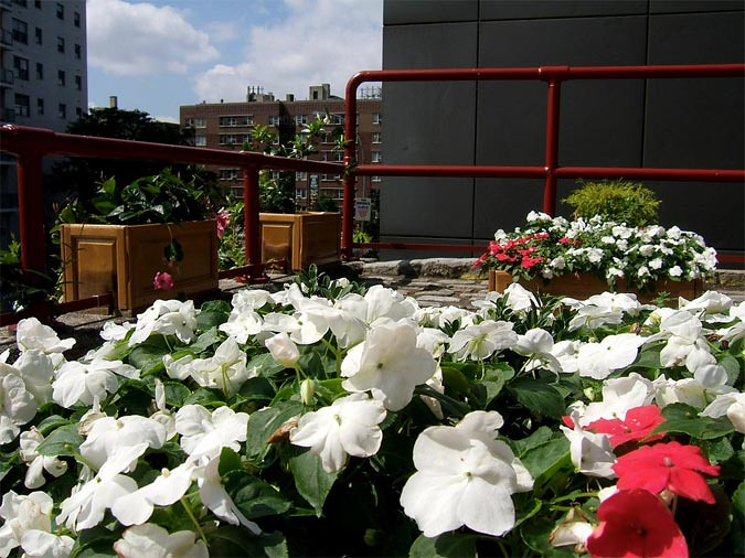 The Bronx's ARTfarm installation brings flowers to the urban landscape (Courtesy NYDOT)