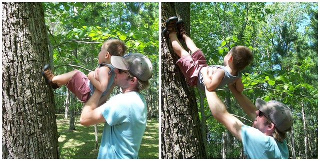 tree climber collage