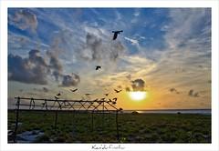 Kan'du finolhu (Sandbank) (Prof EuLOGist) Tags: sunset island j sand picnic cinnamon bank resort crow sandbank kandu jinan hussain alidhoo finolhu