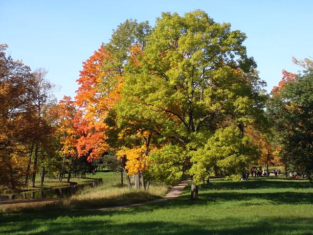 Autumn trees // Осенние деревья