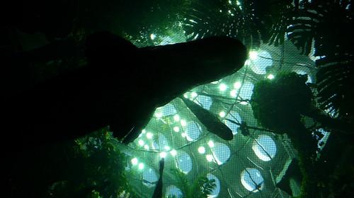 Aquarium at CAS