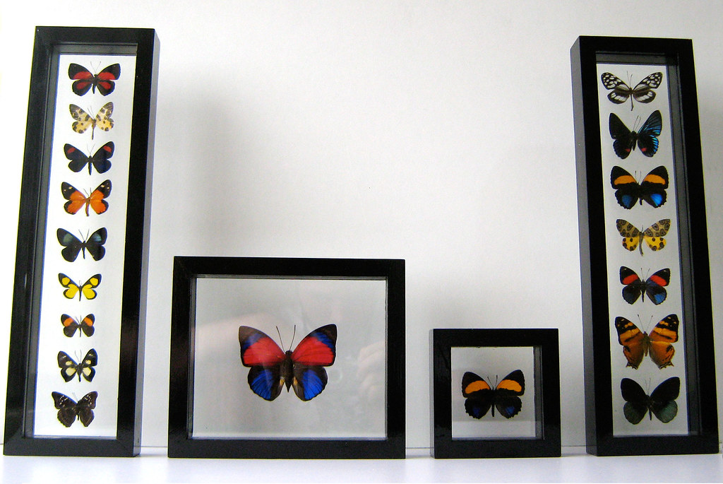 Colorful Mounted Butterfly Art Gifts for Wall Decor in Black Frames