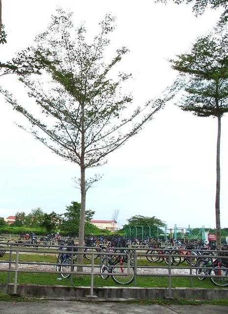 IMG_0365   Tuanku Abdul Rahman University