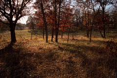 When Deep Shadows Fall (blue corgi) Tags: autumn autumnfoliage film landscape oak fallcolor fallfoliage nikonf3 naturepreserve kodakportra160nc nikkor28mmf35ai helenallisonsavanna minnesotadnrscientificandnaturalarea