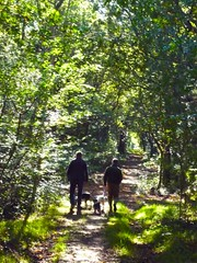 Walking in the forest with Marlon & Millie (danellemac) Tags: uk england holiday love walks lily southcoast bullterrier truelove newforest englishbullterrier whitedog