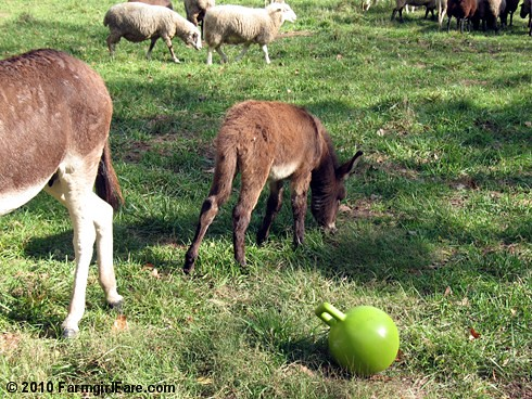 Donkey Ball 3