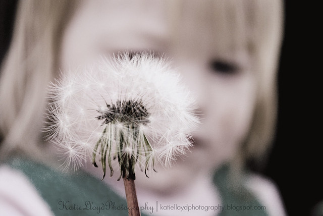 R with Dandelion