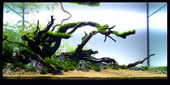 new a' scape (Andy_Online) Tags: aquarium ada pesci piante aquaticplants aquascape tropica aquascaping acquari acquarionaturale