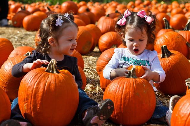 Twin Pumpkins