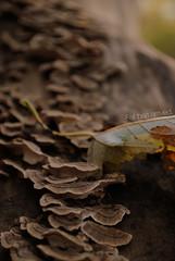 Stairs (AustinGohn) Tags: park brown tree green fall dark dead mushrooms leaf log stump kickapoo nikond3000 austingohn