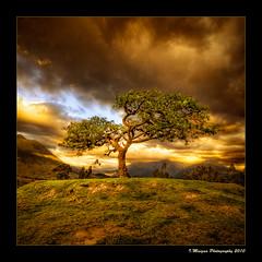 Sacred Tree (Ivn Maigua) Tags: sunset sky tree landscape atardecer golden ecuador ivn hdr otavalo sacredtree imbabura nikond200 colorphotoaward ellechero artistictouch ivnmaigua