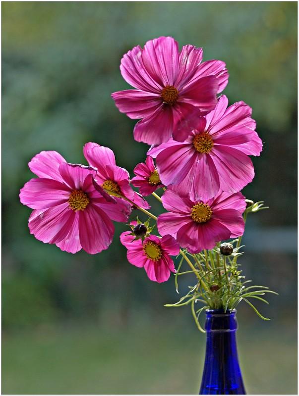 Vos plus belles photos du mois d'octobre 2010 5155647508_daabfe2892_b