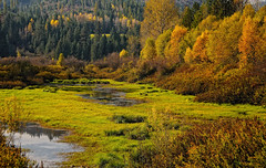 Autumn Splendor (Phil's Pixels) Tags: autumn idaho potofgold cataldo