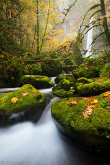 stone green... (Mac Danzig Photography) Tags: longexposure autumn water leaves oregon landscape waterfall moss stream falls elowah tnc11