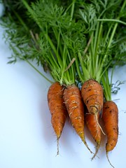 freshly picked (alifesopeachy) Tags: food orange yum vegetable carrot carrots homegrown foodfoto veggiepatch