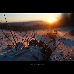 first snow and sunrise (stella-mia) Tags: morning autumn winter orange sun snow fall norway sunrise lumix panasonic explore lensflare 20mm firstsnow frontpage morningsun gf1 explored dmcgf1 veslelien annakrmcke