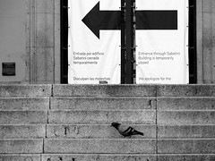 Resignacin/Resignation (Joe Lomas) Tags: madrid leica blackandwhite bw espaa byn blancoynegro stairs spain pigeons steps bn palomas reinasofia escaleras escalones museoreinasofia mncars peldaos photostakenwithaleica