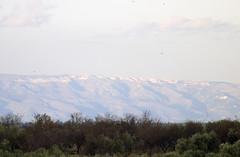 Monte Sant'Angelo (Vista da Lavello-PZ) (Pietro Calabrese) Tags: italy lumix italia panasonic tele puglia gargano foggia montesantangelo fz38 fz35