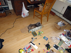 Isis experiments with what is now her Primo Boxo (benchilada) Tags: cat is experiments with box her primo what now isis boxcat boxo