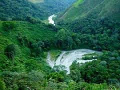 Meandro en la selva