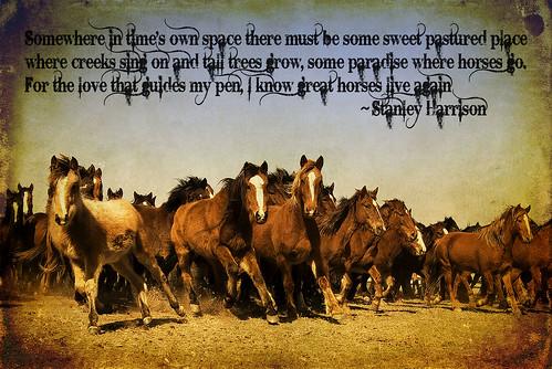 wild horses edit
