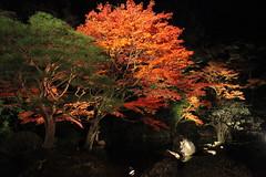 IMG_2716 (Hiro - KokoroPhoto) Tags: autumn leaves japan canon eos kyoto  5d colored  coloredleaves    eos5dmarkii