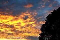 Pino solitario en el atardecer (Ente inexistente) Tags: sunset sky clouds atardecer mar tramonto cielo nubes pino ocaso
