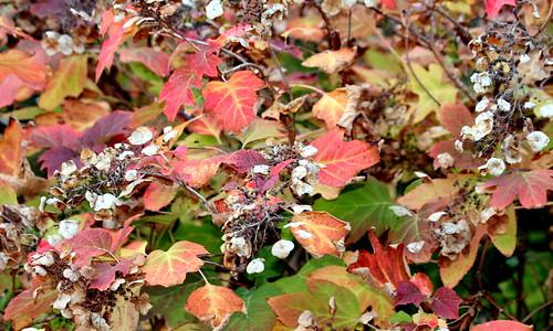 un poco más de otoño 25-11-2010 18-29-14