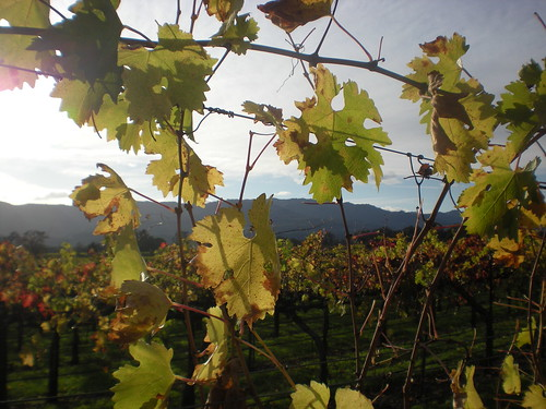 Fall at Mumm Napa