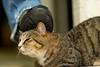 Stray Cat Jazz (Silentmind8) Tags: bird animal cat bug fur foot shoe eyes feline kick f14 tabby pussy kitty 85mm ears whiskers jeans stray catch mean nikkor stomp puss pest shoo noes cruel