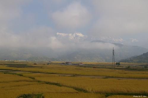 Fewa Prince (Pokhara)