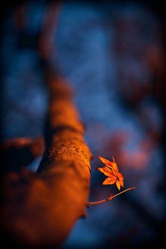 fall_01122010-5