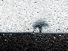 Black rain (fabry ... ) Tags: blackwhite explorer fabrizio bianconero circolofotograficopaullese ricohgx200 mygearandme