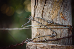 Arame farpado (caiopetronio) Tags: barbed wire wood shallow dof