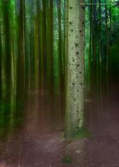 Would a volunteer please step forward... (Damon Finlay) Tags: nikon d750 nikond750 nikkor 1635mm f4 nikkor1635mmf4 maspie den maspieden falkland fife woods woodland digitalblending naturalbeauty nature scotland