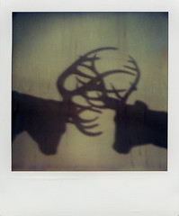 (rougerouge) Tags: shadow film wall analog polaroid sx70 fight deer combat expired pola tz cerf autaut panpola