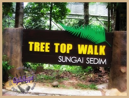 Tree Top Walk, Sg. Sedim