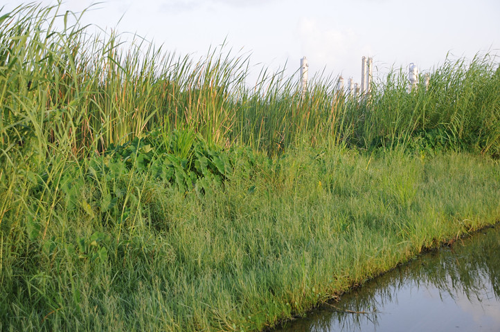 reeds and powerplant_1885 web