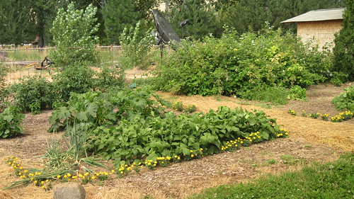 garden 7.28.10