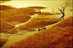Pescador  Santarém 2002 (Ricardo_ Lima) Tags: mywinners photosandcalendar panoramafotográfico theoriginalgoldseal amazônial´amazonieamazonieamazonpescadorfishersunsetinamazonyelloworangecoloraerialfotographyamazonaerialphotographyhorizontaltexture santarémfotoaéreasantarém