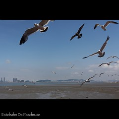 Seagull flying in front of the light house (Estebahn De Peschruse) Tags: voyage trip lighthouse bird canon eos asia harbour seagull gull korea seoul asie southkorea coree oiseau  carnetdevoyage  oido goodcomposition tokina1224mm 450d  coreedusud