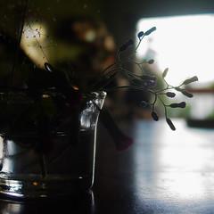 Contraluz / Backlight (Karen Blix) Tags: light shadow luz water contraluz agua sombra reflejo vase buds backlighting florero capullos f2025carlzeissvariosonnar3x