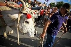[maggiolata] (bass_nroll) Tags: carnival party people feast canon fun italia gente agosto