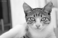Abandoned Cat - 1 (Ben Heine) Tags: camera light wallpaper portrait blackandwhite hairy baby inspiration cute art love beauty hair poster fur nose photography bigeyes paw focus friend kitten feline energy alone dof sad sweet quality tiger details homeless kitty streetlife ears yeux sharp explore greece story triste ami independent ojos expressive series lovely ogen copyrights bestfriend rue pure poil grce tigre emotive ecosystem fourrure vibration mignon chaton flin saintvalentine unfair patte adoptme abandonedcat pupille theartistery benheine chatabandonn flickrunited samsungnx10 benheinecom