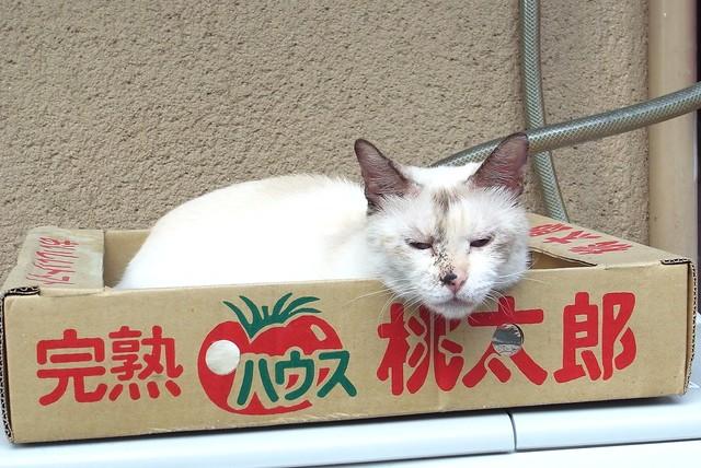 Today's Cat@2010-09-05