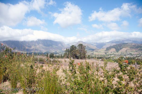 RYALE_Cape_Town-18
