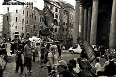 Volo (farnitano.amos) Tags: street city people blackandwhite bw italy rome roma animal nikon europa europe strada italia gente pigeon bn animale piccione biancoenero citt stphotographia