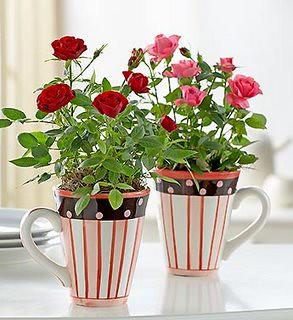 rosas em canecas